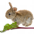 Bunny eating — Stock Photo #1696129