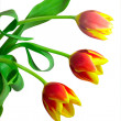 Close-up bunch of three tulips — Stock Photo