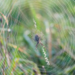 Close-up spider web - Stock Photo