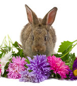Bunny smelling flowers — Stock Photo