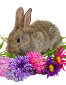 Bunny with flowers — Stock Photo