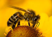 Close-up bee on flower — Foto de Stock