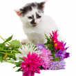 Kitten sitting with flowers — Stok fotoğraf