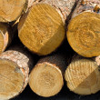Logs — Stock Photo #1714686