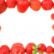 Many strawberries in frame — Stock Photo