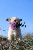 Puppy dog hold flowers in mouth — Stock Photo