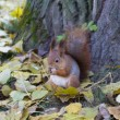 Squirrel — Stock Photo #1745096