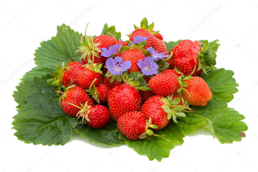 Close-up of ripe strawberries on leafs, isolated over white background — Stock Photo #1745344