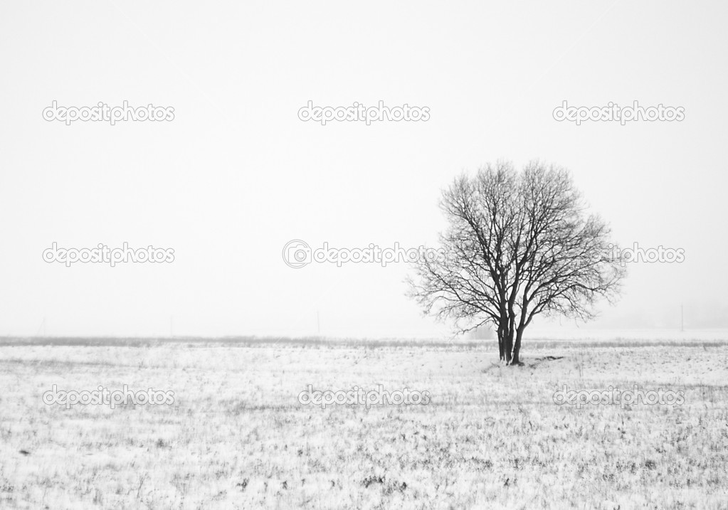 Winter landscape with lonely tree in field  Stock Photo #1748671