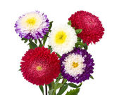 Asters bouquet isolated — Stock Photo