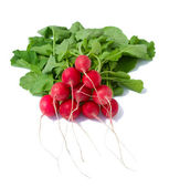 Bunch of radish — Stock Photo