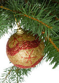 Christmas ball in a fir tree — Stock Photo