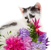 Kitten sitting near flowers — Stock Photo