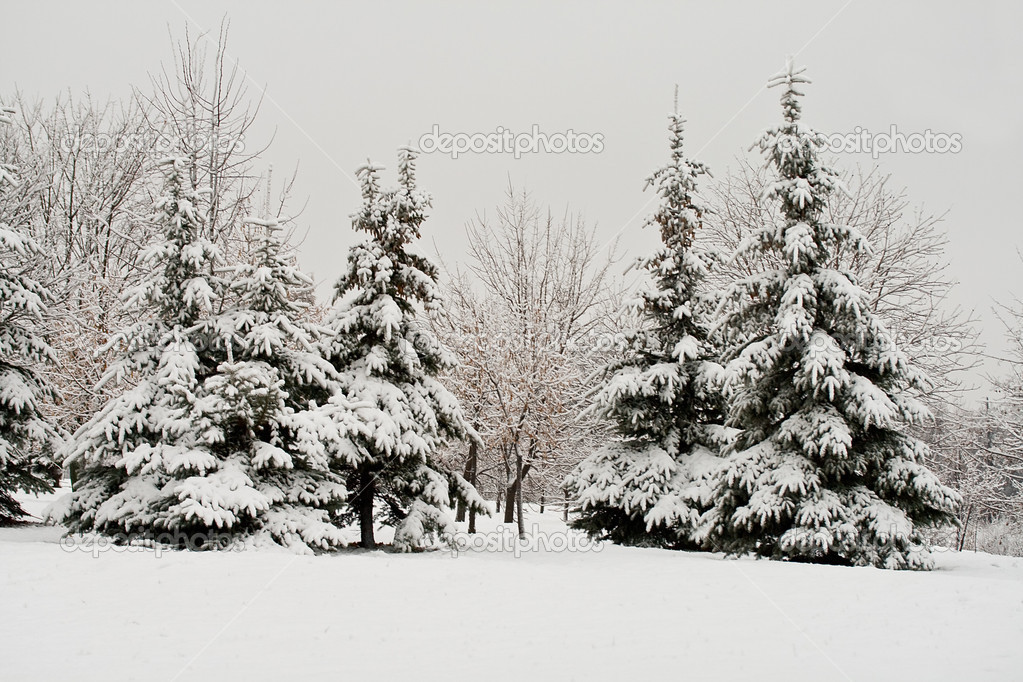 December fir forest covered with snow — Stock Photo #1801091