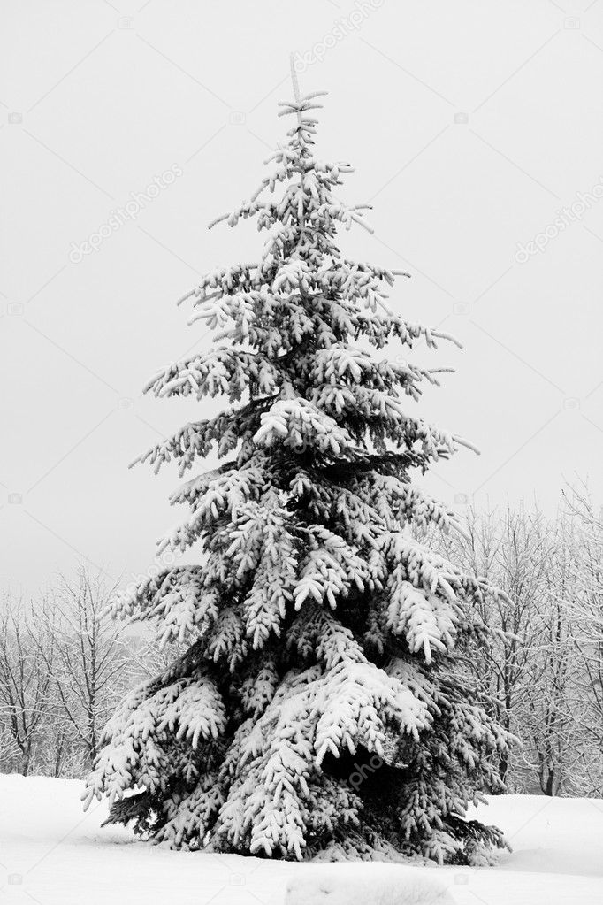 December fir tree covered with snow — ストック写真 #1801118