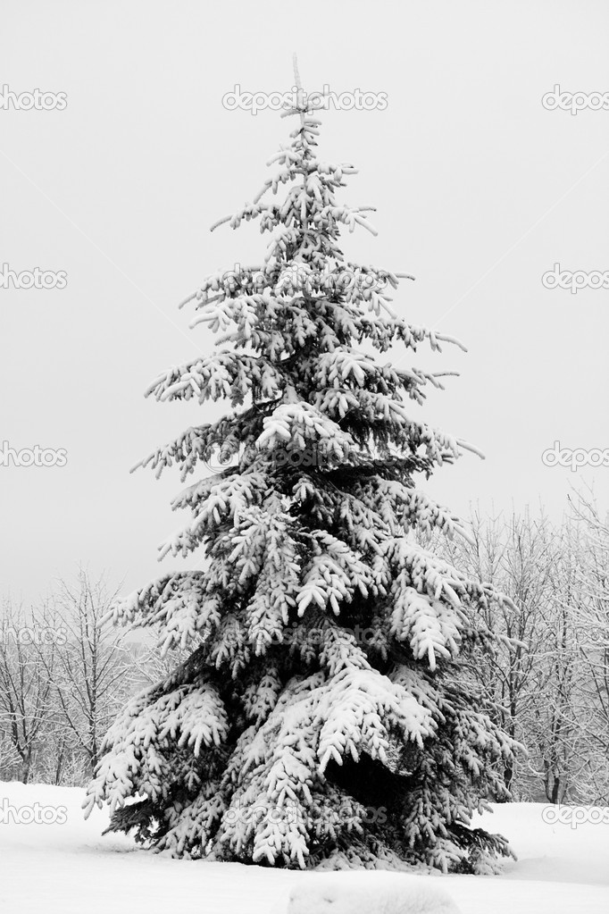 December fir tree covered with snow — Stok fotoğraf #1801118