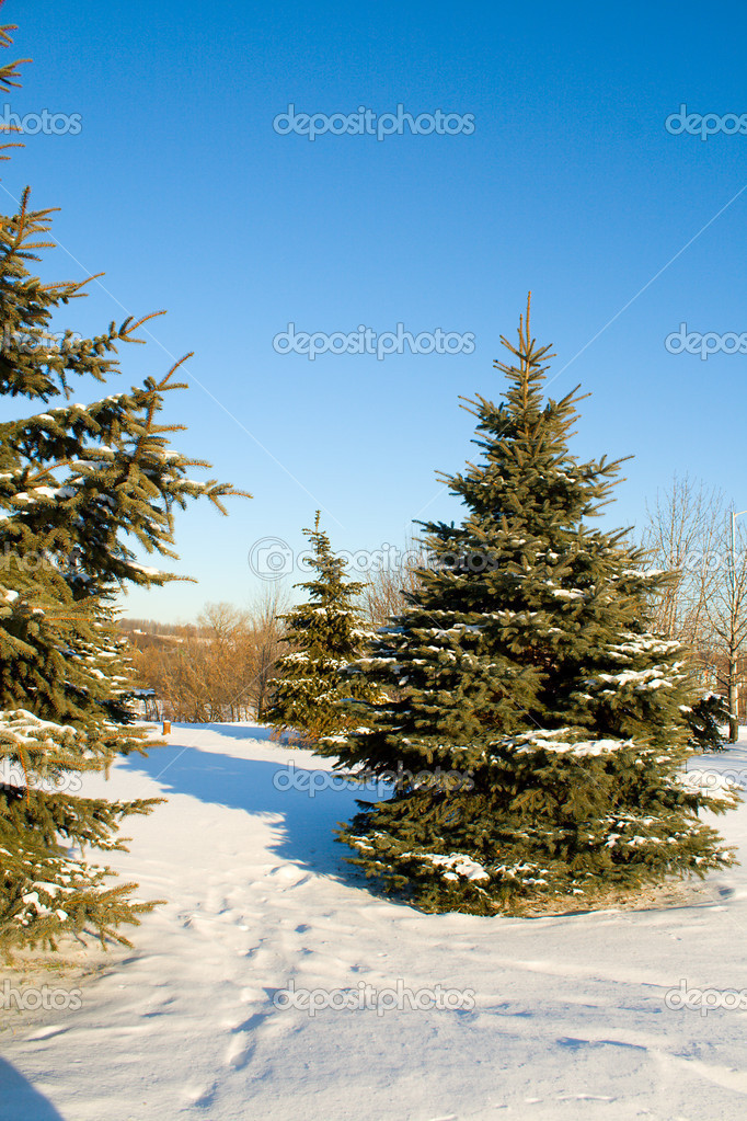 December fir trees covered with snow on blue sky  Stock Photo #1801221