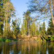 River in forest — Stock Photo #1816622