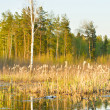 Rushy swamp — Stock Photo #1816806