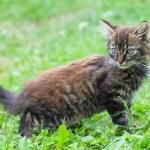 Small funny kitten — Stock Photo #1817161