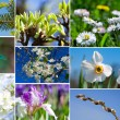 Spring time collection — Stock Photo