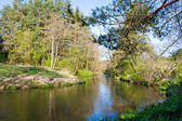Small river in forest — Stock Photo