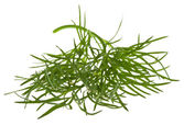 Sprig of dill isolated — Stock Photo