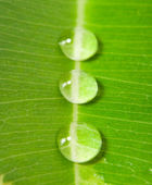 Three water drops on a green leaf — Stock Photo
