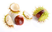Two autumn shaken chestnuts — Stock Photo