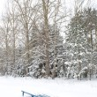 Royalty-Free Stock Photo: Lonely snowy banch