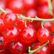 Ripe red currant — Stock Photo