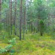 Stock Photo: Mixed forest in summer
