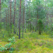 Mixed forest in summer — Stock Photo