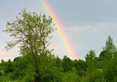 Rainbow against a blue sky after rain — Стоковое фото