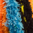 Colored feather - Stock Photo