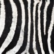Natural Zebra background - Stock Photo