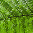 Fern — Stock Photo #2544707
