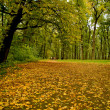 Autumn Alley in park — Stock Photo #1634189