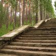 Stairs in a forest — Stock Photo