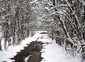 Snow covered alley — Stock Photo