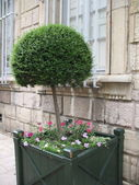 Decoration tree — Stock Photo