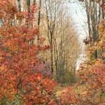 Autumn background — Stock Photo #1817961