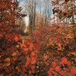 Autumn background — Stock Photo #1817979