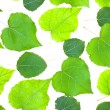 Leaves isolated — Stock Photo