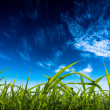 Cloudy sky and grass - Stock Photo