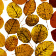 Autumn leaves — Stock Photo #1830239