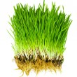Stok fotoğraf: Grass isolated
