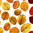 Autumn leaves — Stock Photo #2211129