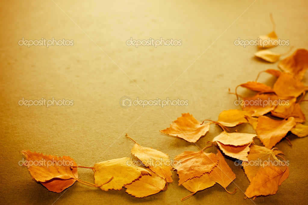 Autumn leaves background  Stock Photo #2210791