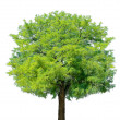 Idyllic tree — Stock Photo